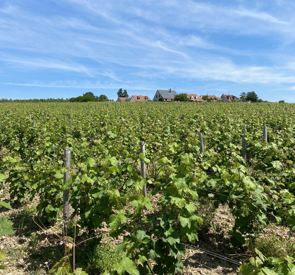 Vignes Coteaux du vendômois